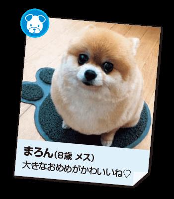 201611_pet01