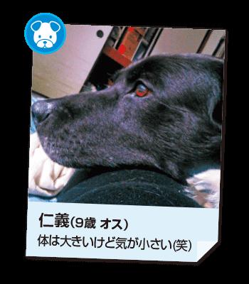 201611_pet02