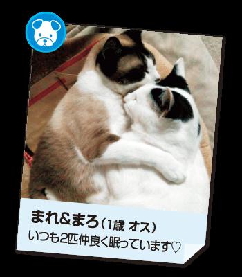 201611_pet04