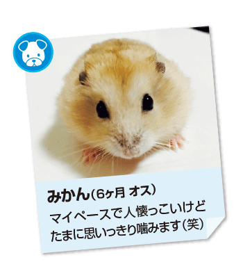 201611_pet06