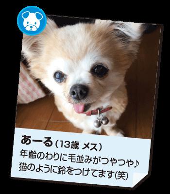 201702_pet01