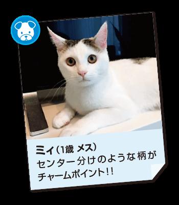 201706_pet02