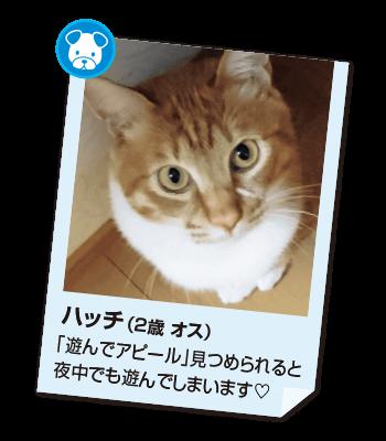 201705_pet03